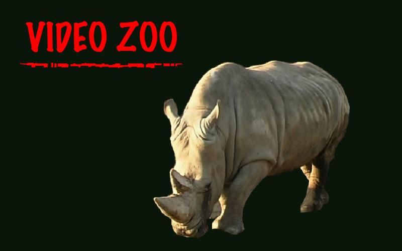 Videozoo: Oplæg til hjemmeside for København ZOO.
